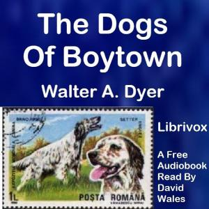 Dogs Of Boytown